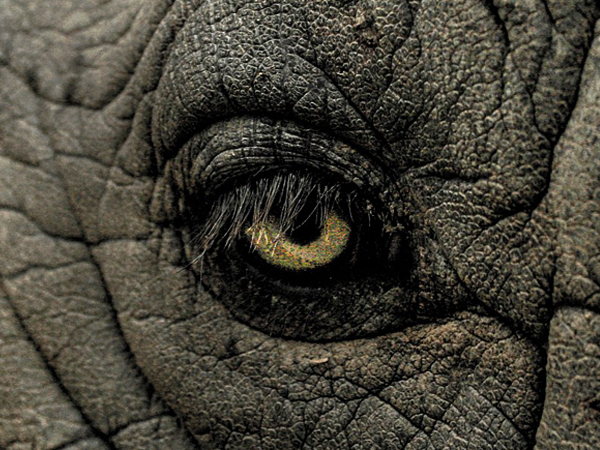 Stella-Projekte-Elefantentraeume