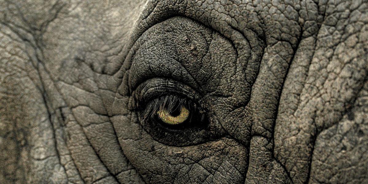 Elefantenträume